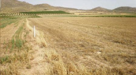 Venta de terrenos en Jumilla, Murcia,