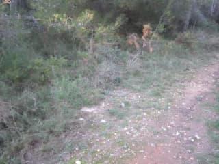 Foto 3 Camino Viejo Azagador De La Raya, 106, Bajo, 12580, Benicarló (Castellón)