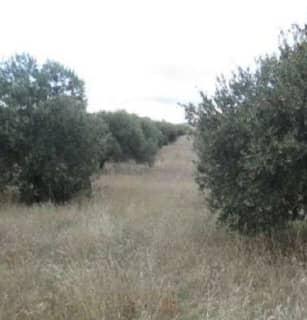 Foto 2 Lugar Paraje Montes De Argenzon, Vallas De Buey, 402, Bajo, 31591, Corella (Navarra)