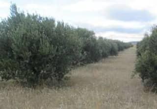 Foto 1 Lugar Paraje Montes De Argenzon, Vallas De Buey, 402, Bajo, 31591, Corella (Navarra)