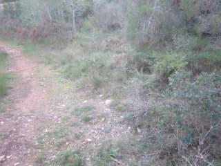 Foto 1 Camino Viejo Azagador De La Raya, 106, Bajo, 12580, Benicarló (Castellón)