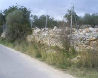 Foto 1 Lugar Partida Les Crevetes, Sn, Bajo, 12589, Càlig (Castellón)