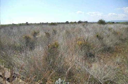 Venta de terrenos en Alcalà de Xivert,
